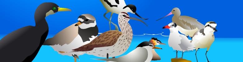 jornadas de turismo ornitológico