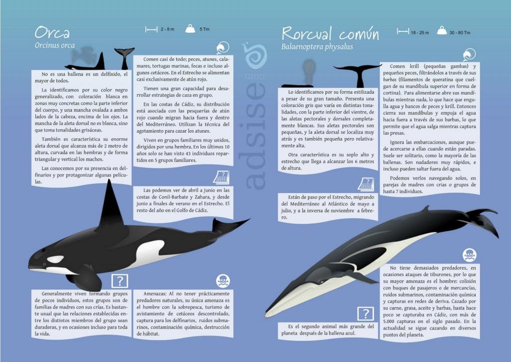 Cuaderno de campo cetaceos y tortugas
