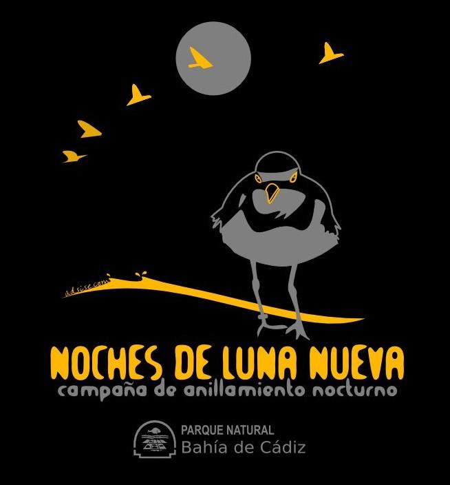 Ilustracion para camiseta anillamiento nocturno