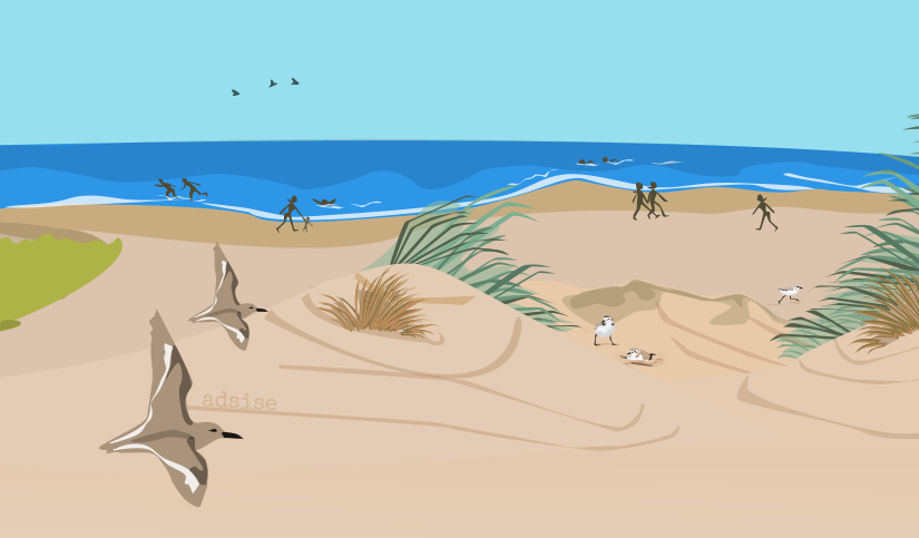Ilustración para la campaña salvemos al chorlitejo patinegro. Litoral gaditano